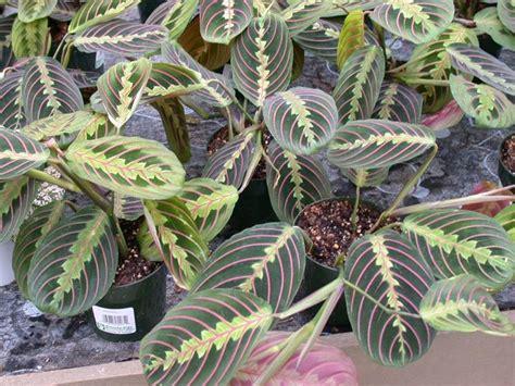 piante da vaso esterne piante da esterno in vaso piante da giardino piante da