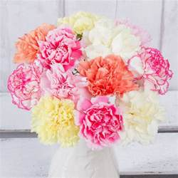 Carnations carnations related keywords amp suggestions carnations
