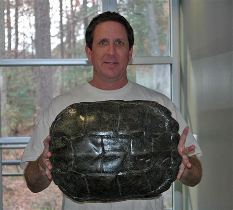 Virginia Records Snapping Turtle