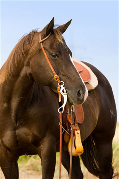 how much weight can a horse carry comfortably how much weight can a horse comfortably carry
