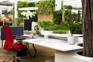 Plants For The Office by The Importance Of Plants In Your Office Myeoffice