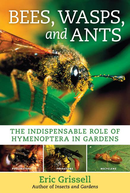 the of the wasp a novel books bees wasps and ants the indispensable of