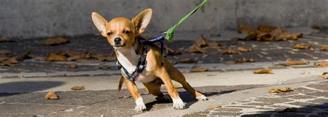 how to stop from pulling on leash how to stop your from pulling on leash ferndog