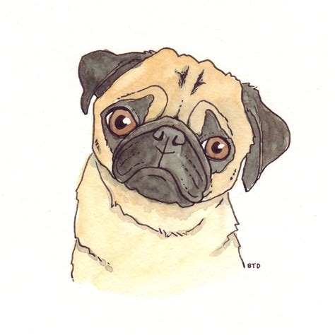 how to draw a pug for image gallery pug drawings