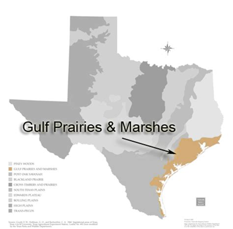 map of texas gulf coast region texas ecoregions texas parks wildlife department