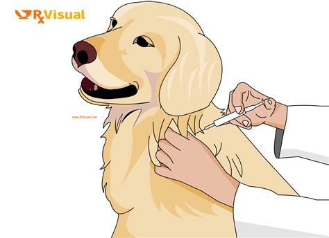 can a vaccinated get rabies rx visual rabies home remedy treatment medicine cure signs symptoms causes