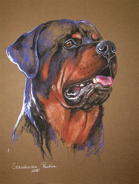 rottweiler drawing rottweiler drawing by stasikowska
