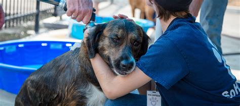 oregon humane society dogs wash fundraiser for s o humane society kobi tv nbc5 koti tv nbc2