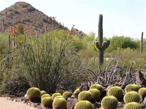 Arizona Desert Botanical Gardens Desert Botanical Garden