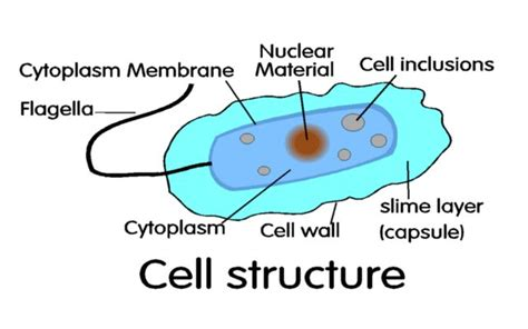 diagram of bacterial cell structure two lagoon system page 8 microorganisms stabilize organics