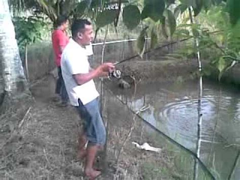 Joran Pancing Air Tawar Pancing Ikan Air Tawar The Knownledge