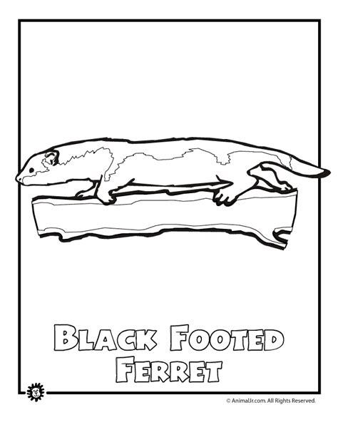 coloring pages endangered animals endangered ferret animal jr