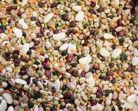 healthy fats nutrition stripped 10 plant based proteins you should be nutrition