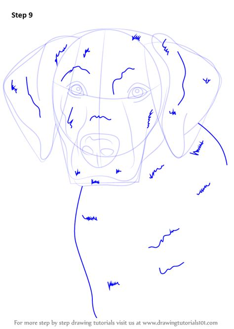 how to the labrador learn how to draw a labrador farm animals step by step drawing tutorials