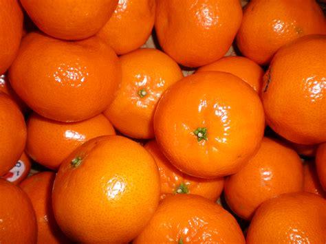 Jeruk Murcott Australia mandarins bulging the trees and delicious in your