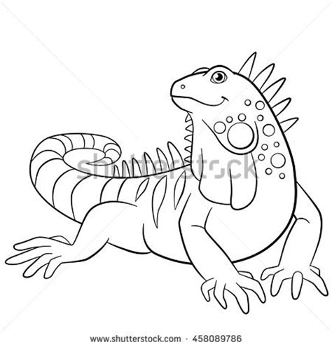 cute iguana coloring page iguana stock images royalty free images vectors