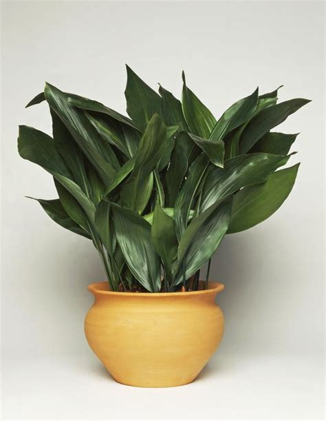 buy house plants the best indoor house plants and how to buy them a house