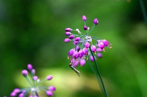 buku harianq wallpaper bunga ungu