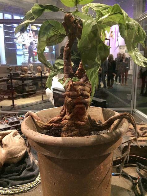 london fun the amazing harry potter tour my little vagabonds
