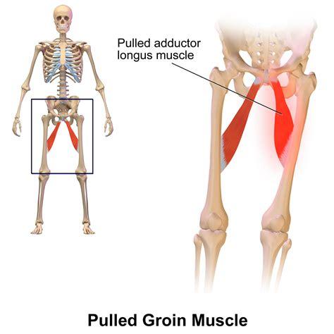 pulled groin diagram groin
