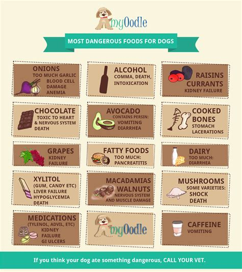 dangerous foods for dogs the most dangerous foods for dogs myoodle myoodle