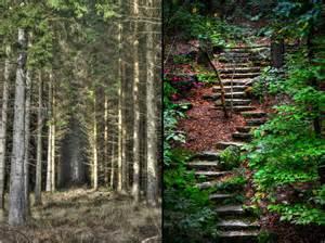 de visita por los bosques encantados image