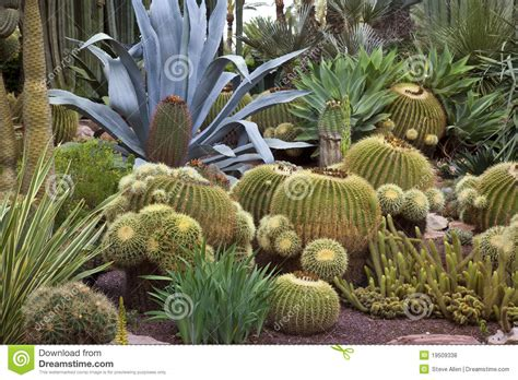 succulents in spain cactus garden elche spain stock photo image of palm botanical 19509338