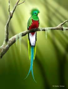 quetzal picture 10059 hdwpro