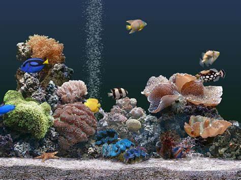 free fish screensaver the desktop wallpaper download free fish