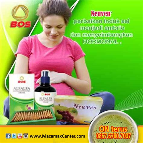 Obat Herbal Maca M X manfaat neuven herbal dan alfalfa produk bos maca max
