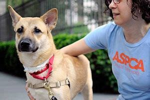 how to a to walk without pulling 71 best aspca images on