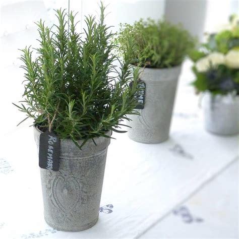 indoor herb pots italian kitchen rosemary herb pot by the flower studio