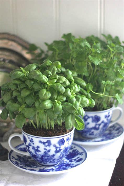 creating an indoor herb garden top 15 low budget ideas for creating small herb gardens