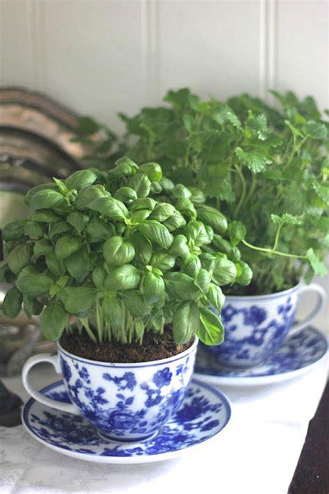 buy indoor herb garden 5 easy ways to grow herbs in your kitchen year the