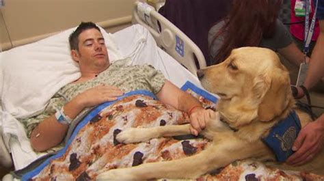 k 9 comfort dogs therapy dogs help bring comfort and smiles to survivors of