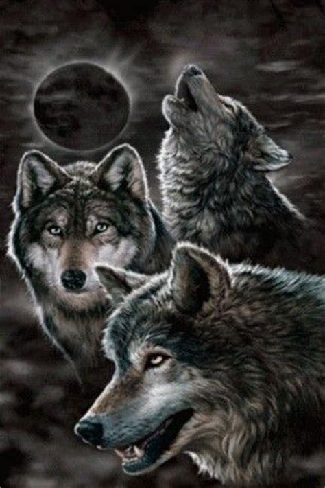 google images wolf wolves wallpaper google zoeken wolves pinterest