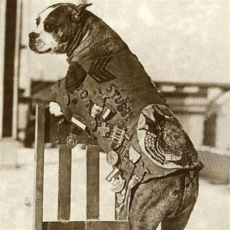 Sergeant Stubby In Ww1 Sgt Stubby Was In 17 Battles In Ww1 Later Became Georg Flickr Photo