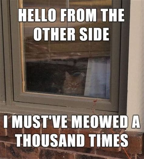 top 40 funny cat memes quoteshumor com