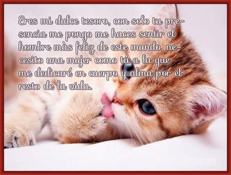 imagenes buenas noches de gatitos 45 im 225 genes de gatitos tiernos con frases y mensajes