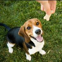 how to stop barking when left alone how to stop dogs from barking when left alone puppy