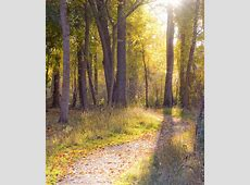 Stressed? Science Says Take A Walk In The Woods | MTPR Listen To Podcasts Online