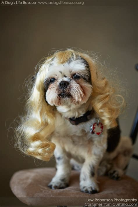 wig cat wig cushzilla wavy wig for dogs cats