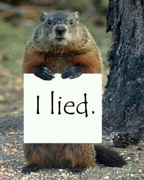 groundhog day up when groundhog day arrives winter is officially half
