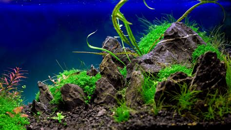 Top Aquascape Wallpapers Weneedfun