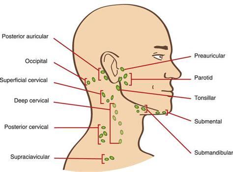 wo liegen mandeln was kann das seiin angst lymphknoten wangen