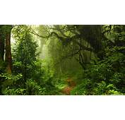 Ultra HD Forest Wallpapers  Top Free