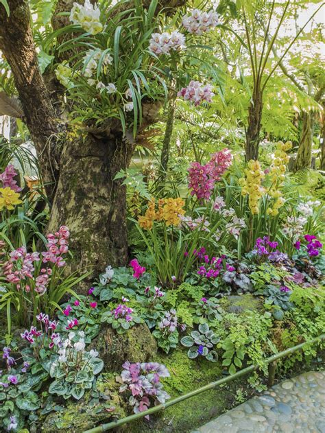 Zone 9 Gardening by Suggested Plants For Climates Tips On Gardening In