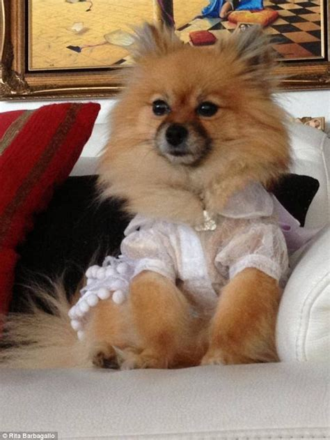 sick pomeranian meet the sydney barbagallo living in a real tale daily mail