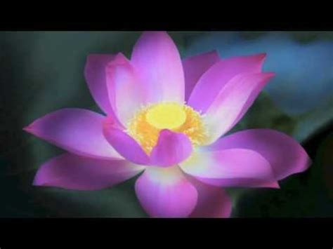 lyrics for lotus flower bomb lotus flower bomb instrumental lyrics instrumental