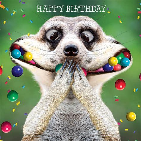 new year animal birthday animals and humour a great combination henri davis